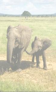 Safari i Uganda
